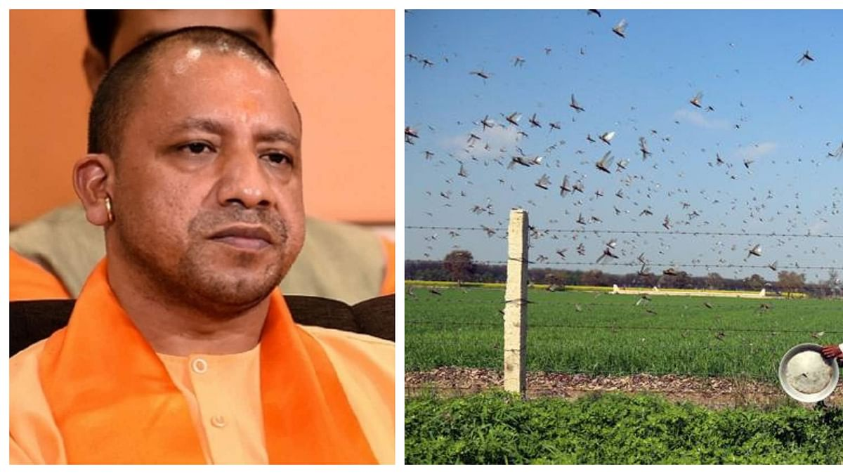Now, UP CM Yogi Adityanath says beat 'thalis' to drive away locusts