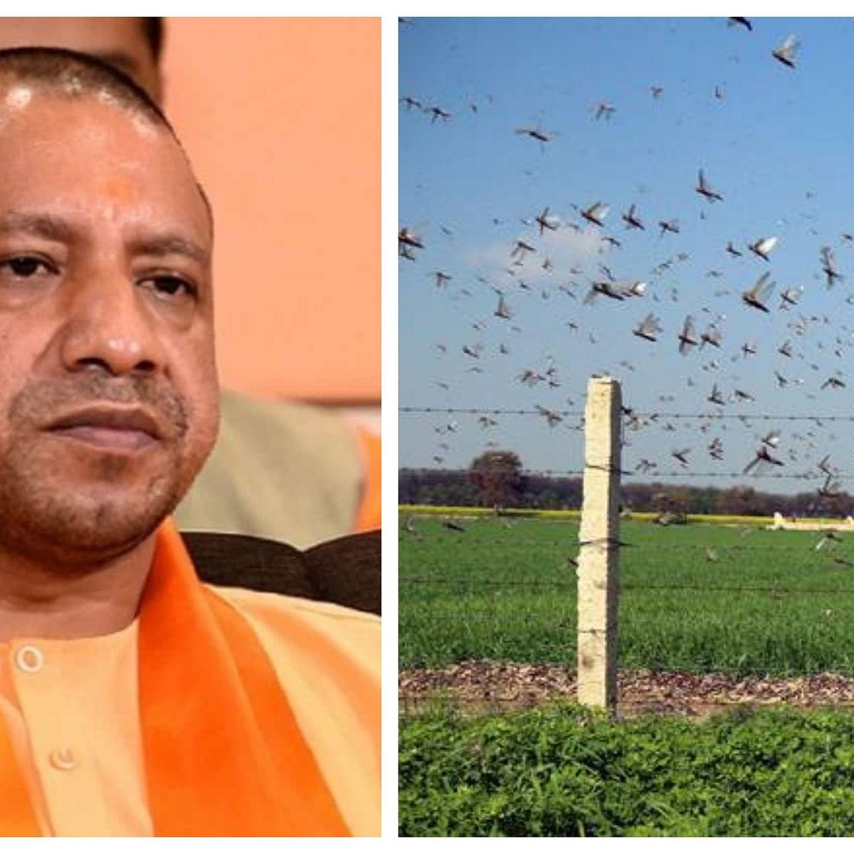Now, UP CM Yogi Adityanath says beat 'thalis' to drive away locusts