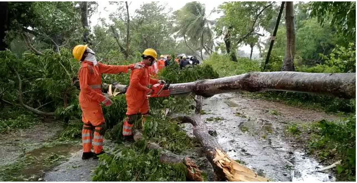 Trees uprooted during heavy storm in Puri, Odisha (Photo Courtesy: Twitter)