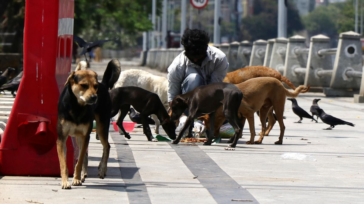Feeding stray dogs becomes contentious issue for residents  in Noida; pregnant Russian woman attacked