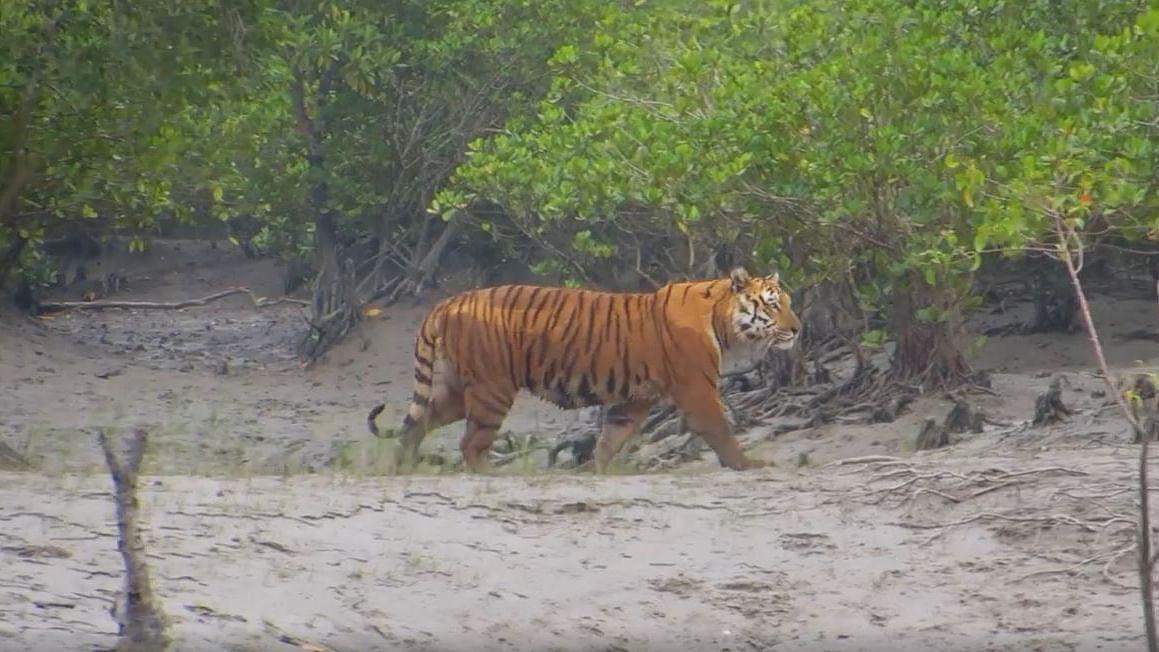 Documentary film: Salute Sundarbans as the 'superhero', the protector of the city of Kolkata