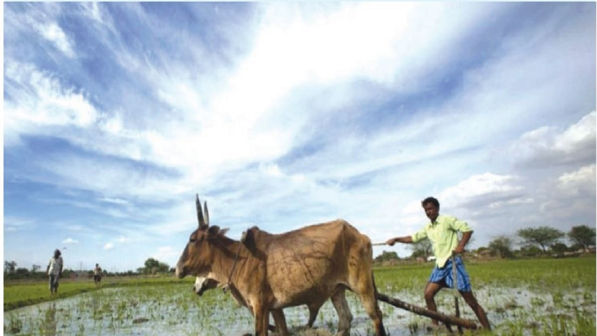 The lucky few: Tales from rural India
