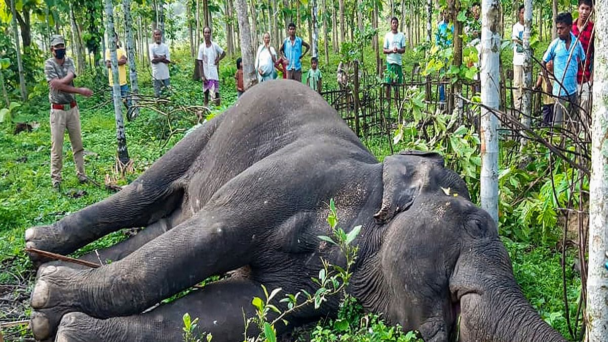 Kerala elephant tragedy: Plea in SC to stop use of snares against wildlife, augmenting forest staff