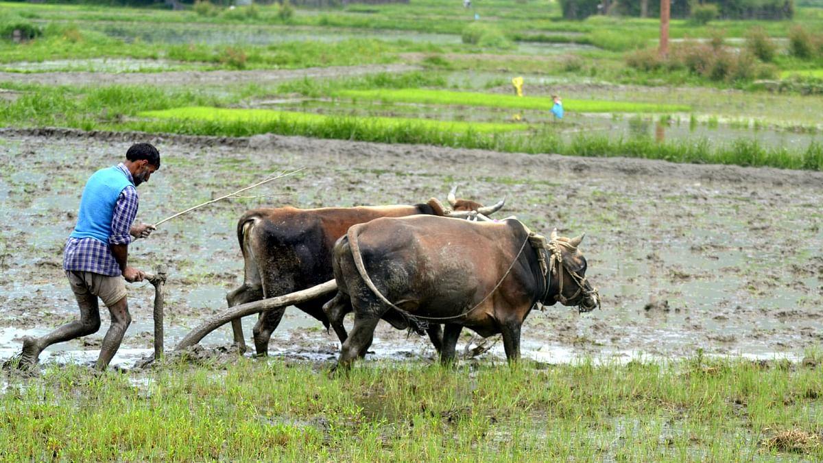 Karnataka allows all to buy, own farmland