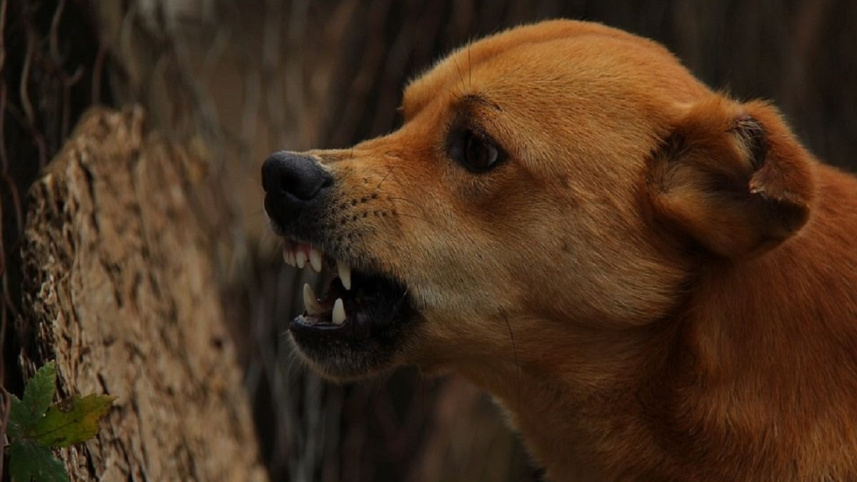 Three booked for killing dog, dragging carcass around