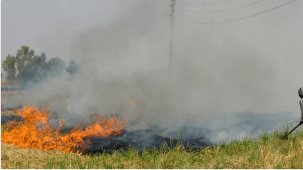 Stubble burning: Maximum cases in Punjab; anger over farm bills among major reasons