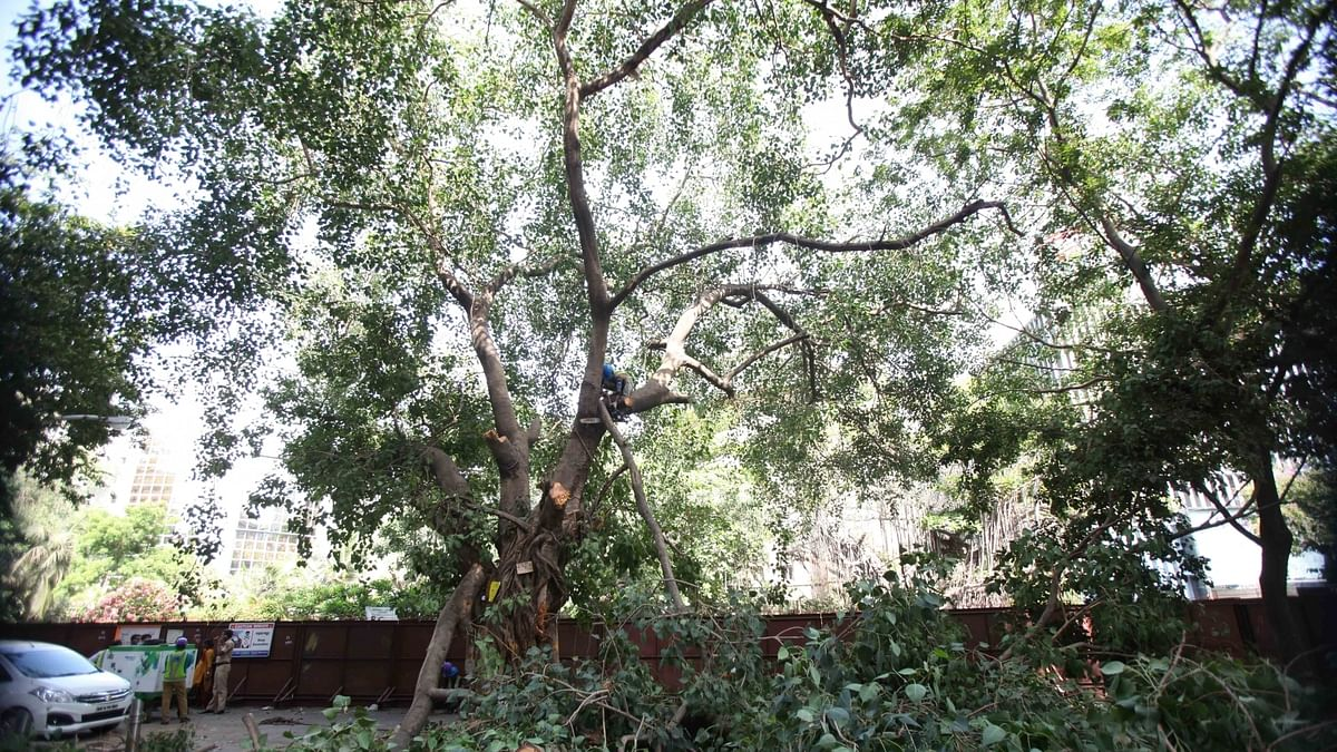 Trees are lungs, 315 fell when AQI & COVID at its worst: Plea in Delhi HC