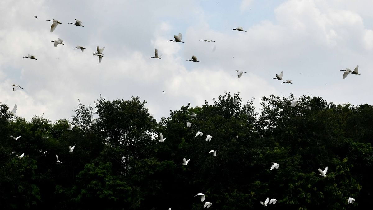 Don't feed migratory birds: Announcements in Varanasi