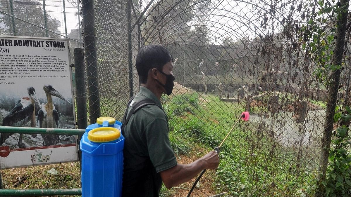 Bird flu scare: Centre asks states, UTs to increase surveillance