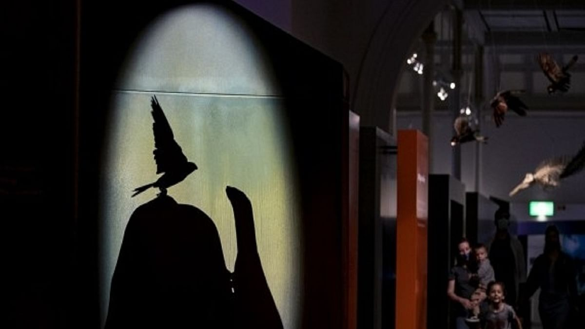 Australia's oldest museum offers late night entertainment