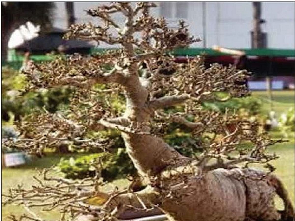 When the theft of a Bonsai plant in Hyderabad caused a flutter
