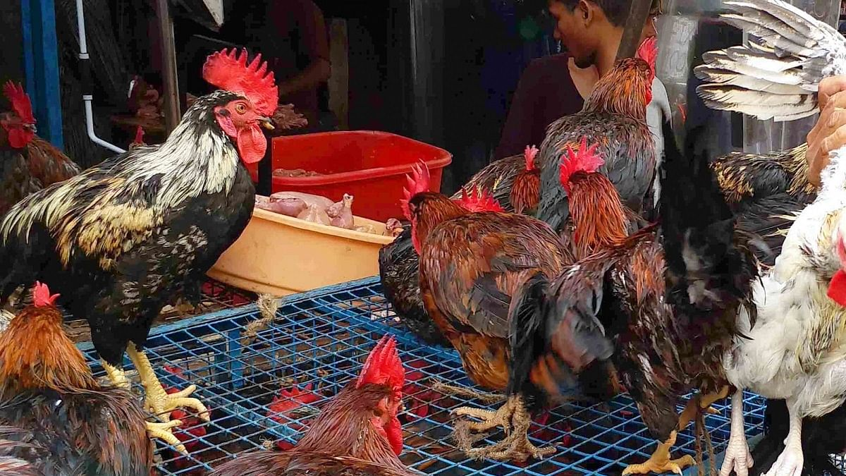Poultry trade hit by bird flu scare, retail sales improve
