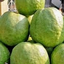 UP: Man lynched to death over guava plucking