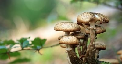 Adding mushroom to your diet makes it more nutritious: Study - National Herald