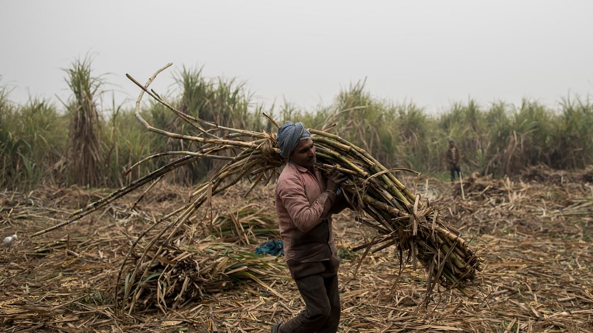 In Uttar Pradesh, sugarcane farmers not paid for 2020, get 'zero price' receipts for 2021