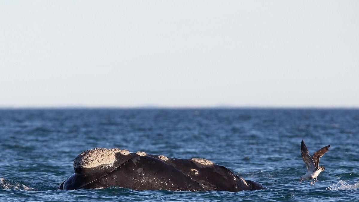 Scientists begin assessment of marine mammal population