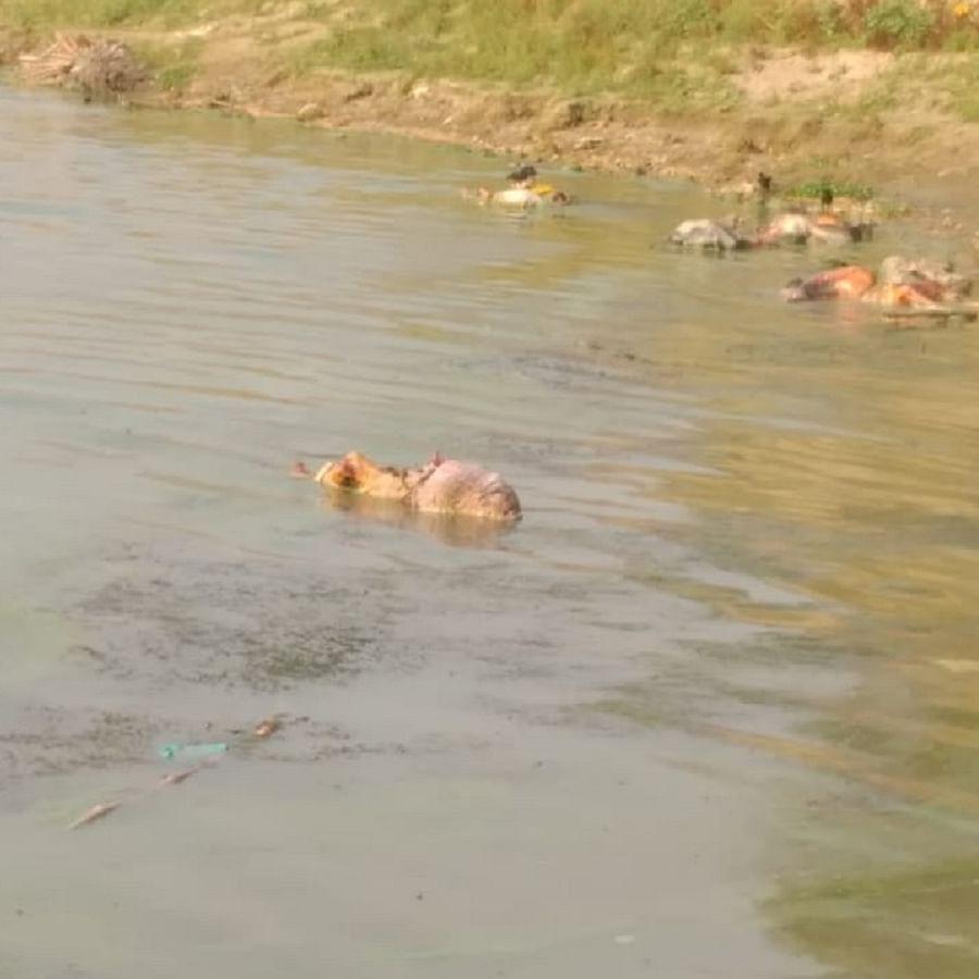Bodies floating in river Ganga  (Photo Courtesy: IANS)