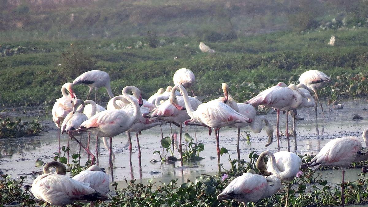 Birding: The Pink Ballerinas
