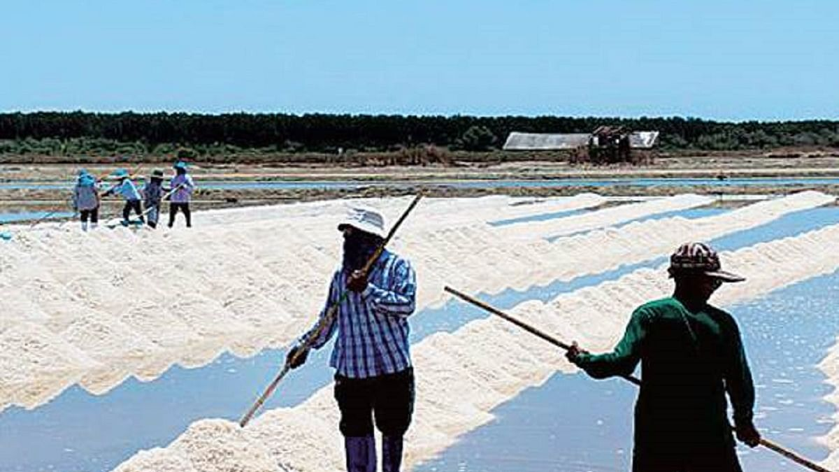 Gujarat: Salt worth Rs 10 crore washed away in flooding due to cyclone