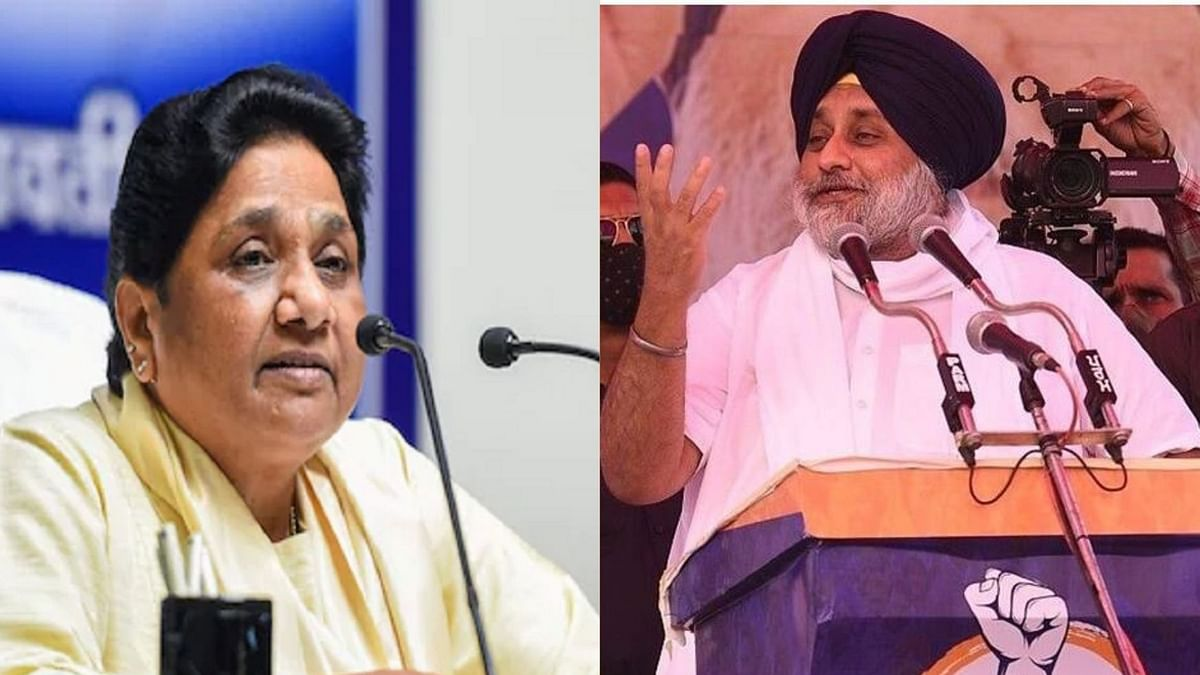 SAD, BSP form alliance for 2022 Punjab Assembly polls