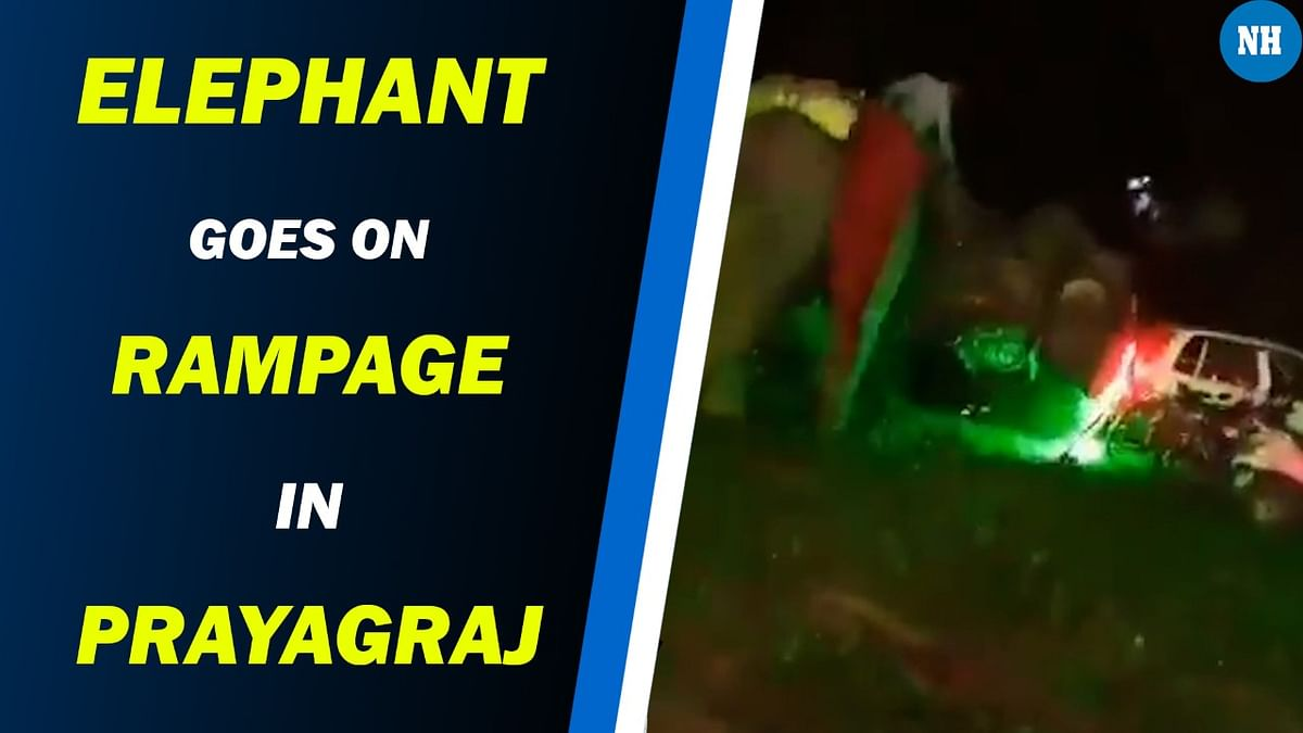 Irked over noise at wedding, elephant goes on rampage in Prayagraj