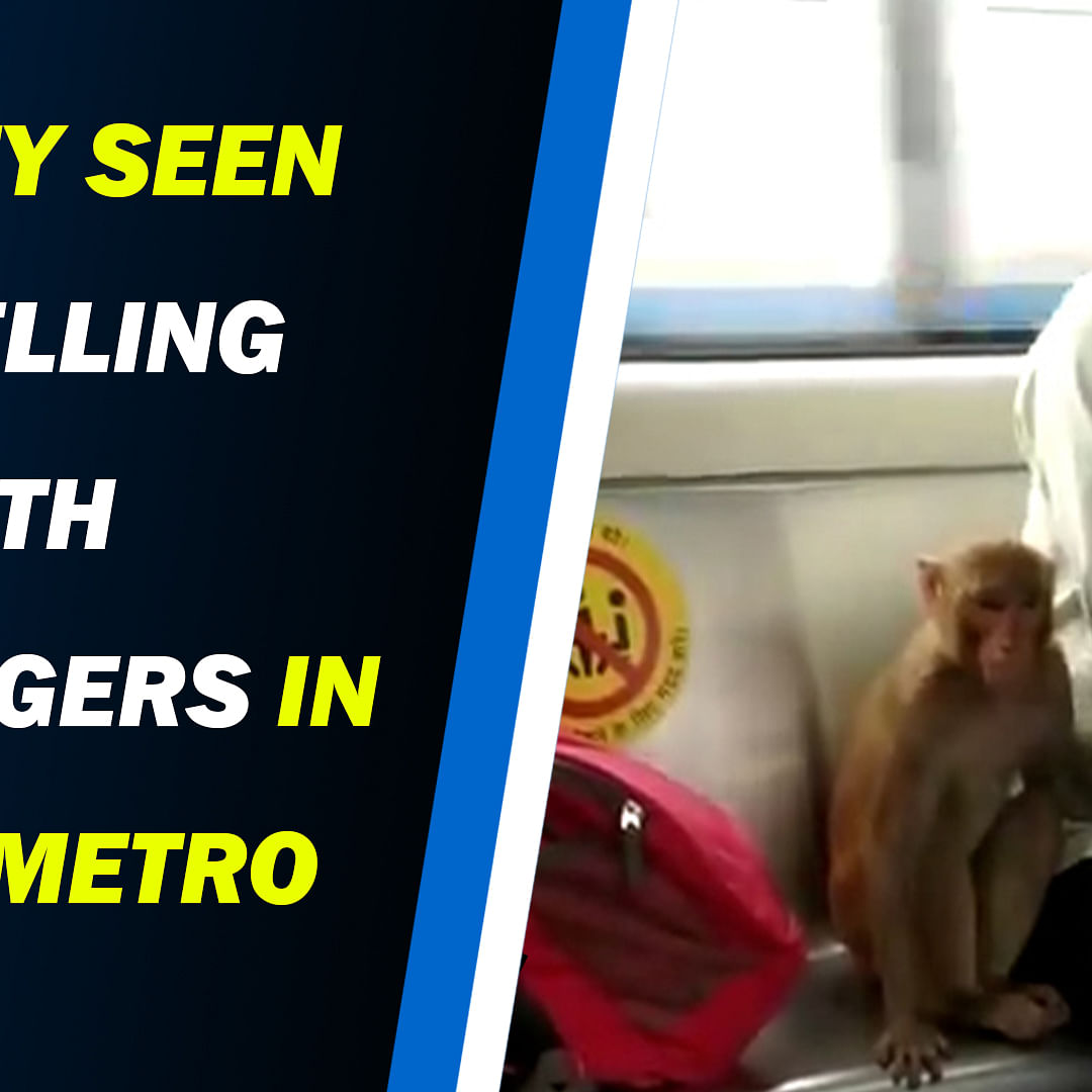 Monkey Seen Travelling With Passengers in Delhi Metro Watch Viral Video