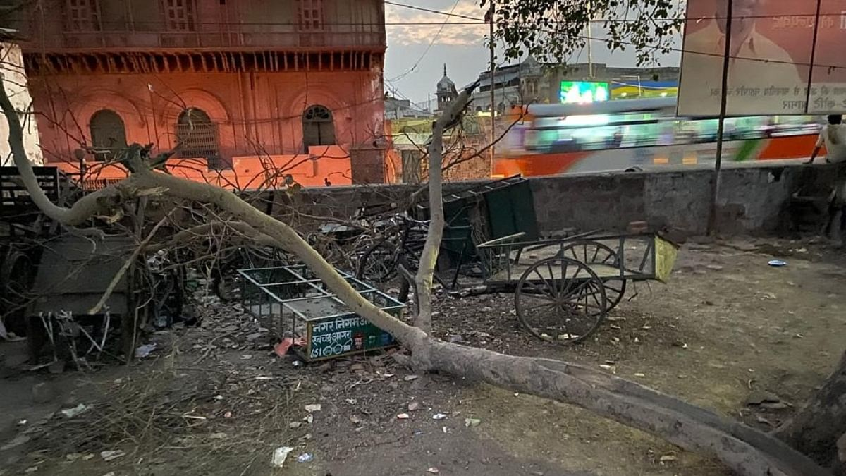 Hundreds of trees chopped off along Yamuna, furore on social media