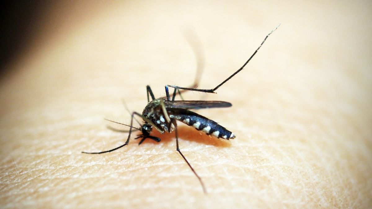 WHO certifies China malaria-free after 70-yr effort