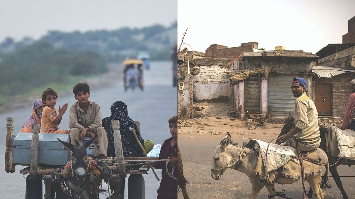 Mystery of the declining donkeys in India as their number goes up in Pakistan