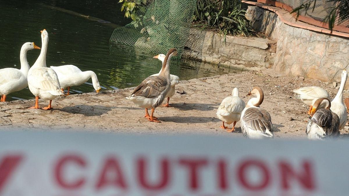 Bird flu reported in Kerala