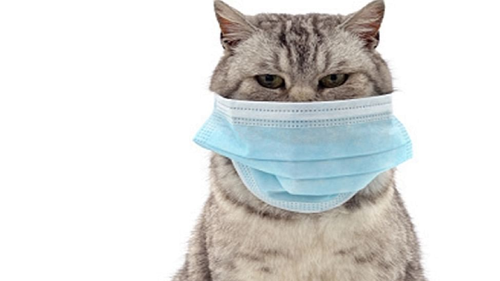 Covid infection in your pet dogs, cats may be common than thought