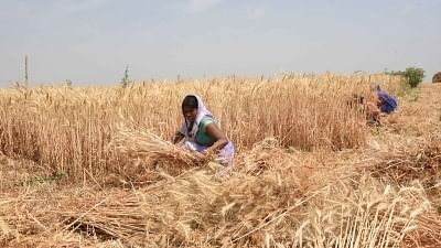 During pandemic, only 20 per cent of farmers under PM-Kisan had access to formal credit