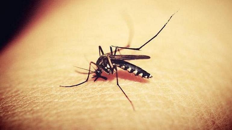 Now Kerala reports Zika virus cases too