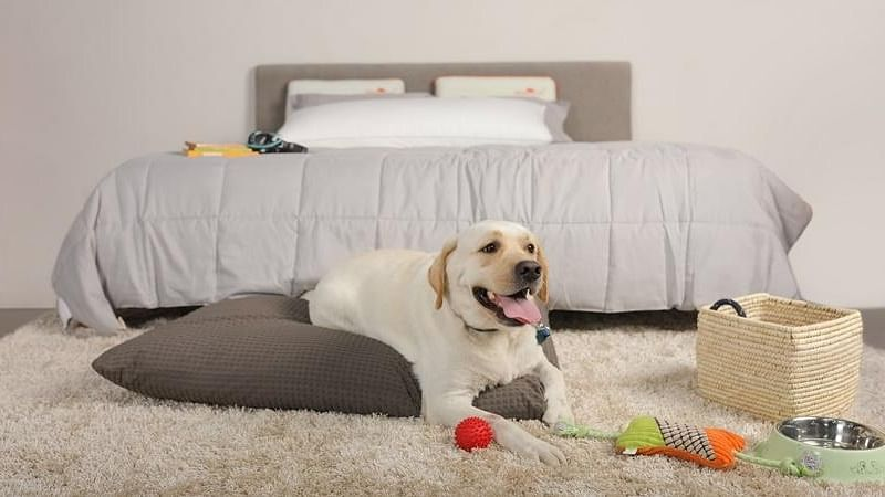 Gift your pet the most comfortable bed on International Dog Day