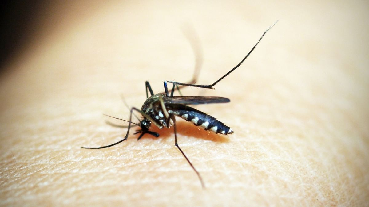 16 dengue cases reported in Patna in 72 hrs