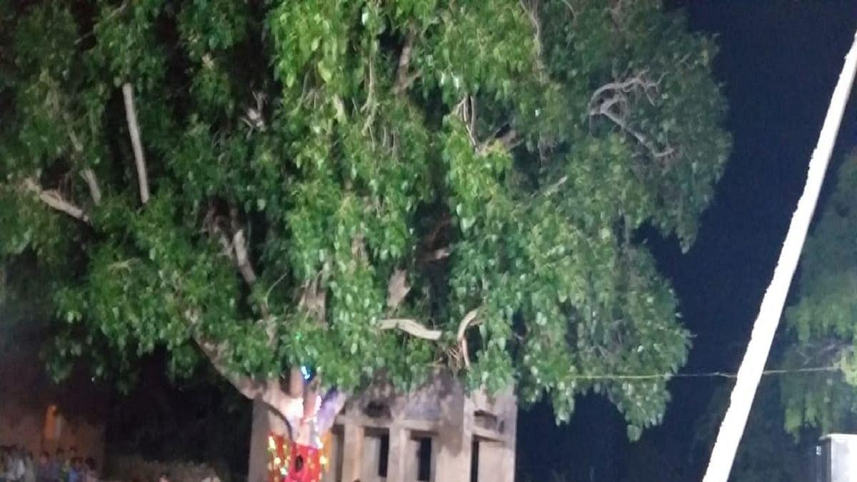 Exploits of Raj 'tree man' inspiration for preserving nature