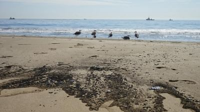 'Massive oil spill off California coast a potential ecological disaster'