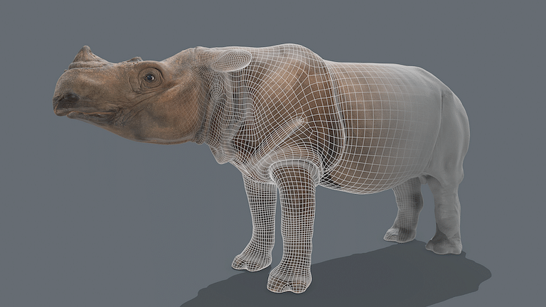 The Rhino in the room: 3D scan brings near-extinct Sumatran species to virtual life