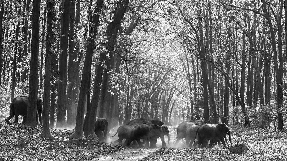 A herd travelling together