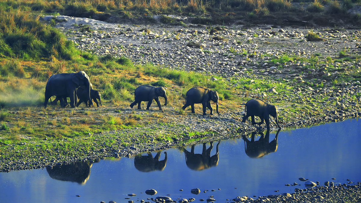 Elephants visiting a water hole at the Corbett National Park