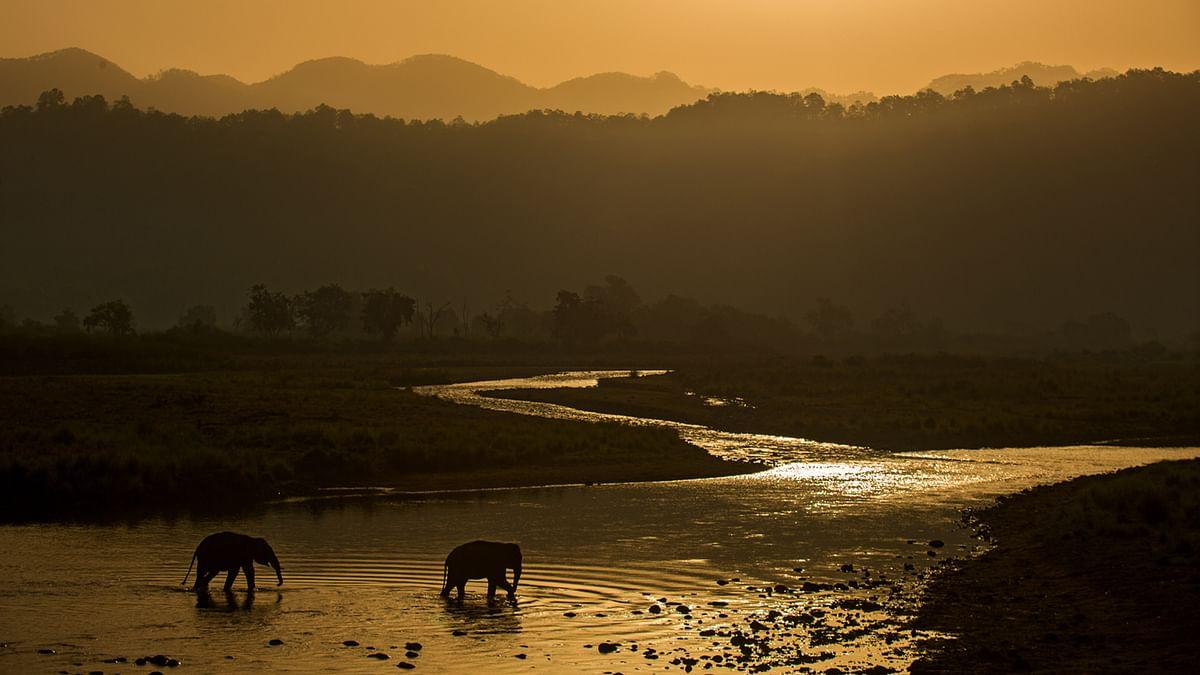 Elephants enjoying the cool respite