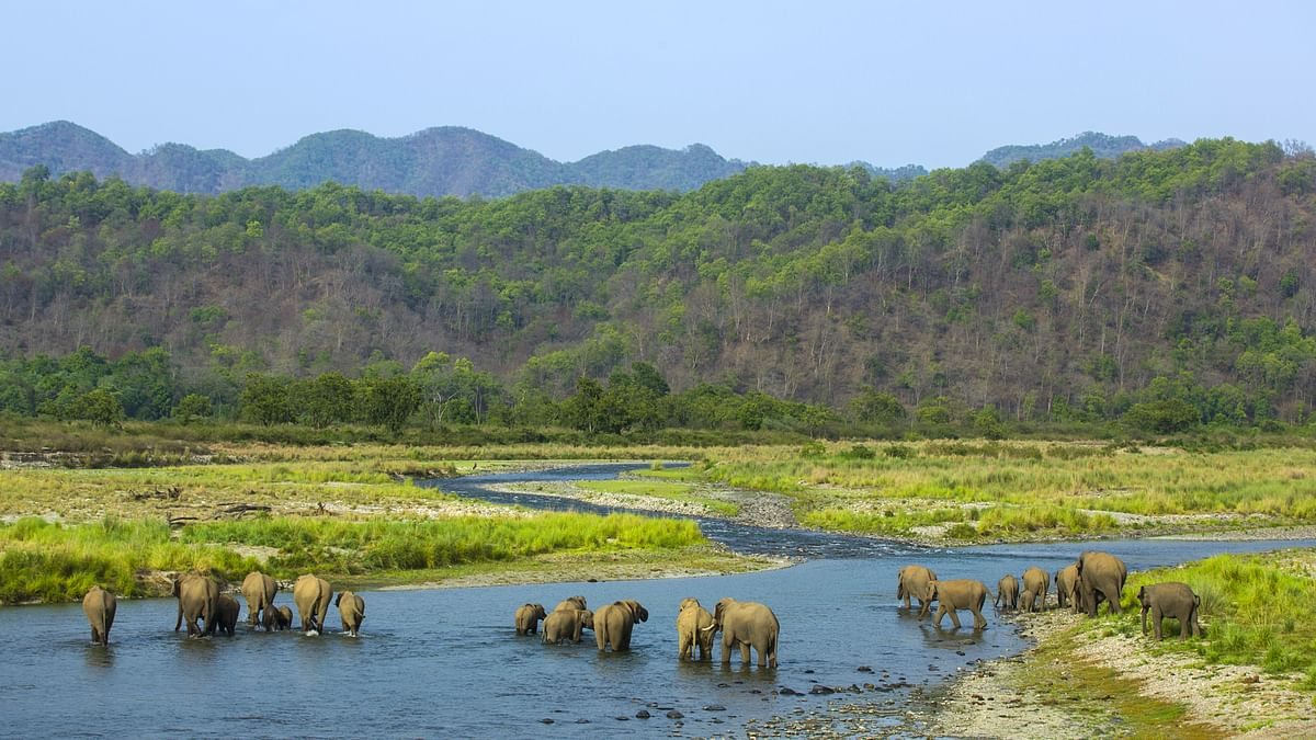 Large herds of elephants gather at the riverbank to wash off the day's heat and dust