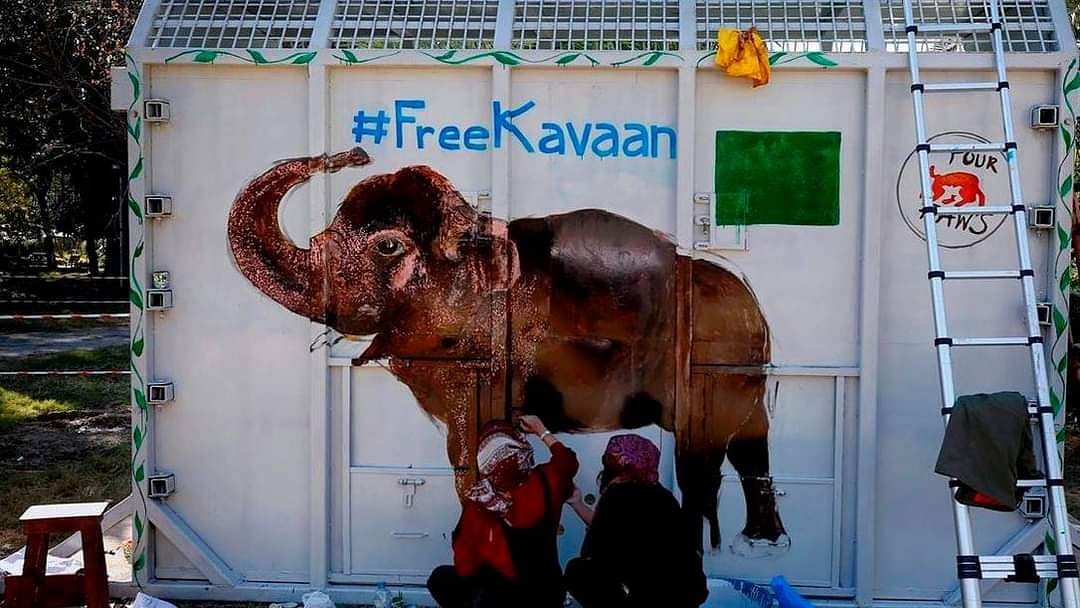 The only Asian elephant in Pakistan, Kaavan, finds home in Cambodia, thanks to Cher