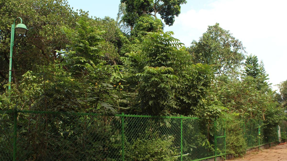 Miyawaki forest at Kanakakkunnu Palace