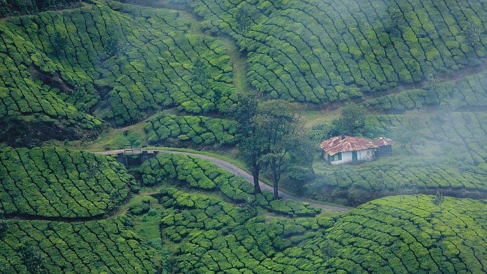 Kerala High Court heard a writ petition filed by Kerala Travel Mart Society