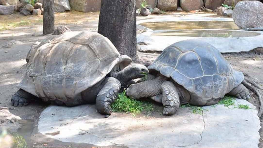 Hyderabad couple adopts 121-year-old giant tortoise at Nehru park for a year