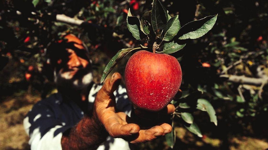 Kerala billionaire Yusuf Ali imports 400 tons of Kashmiri apples