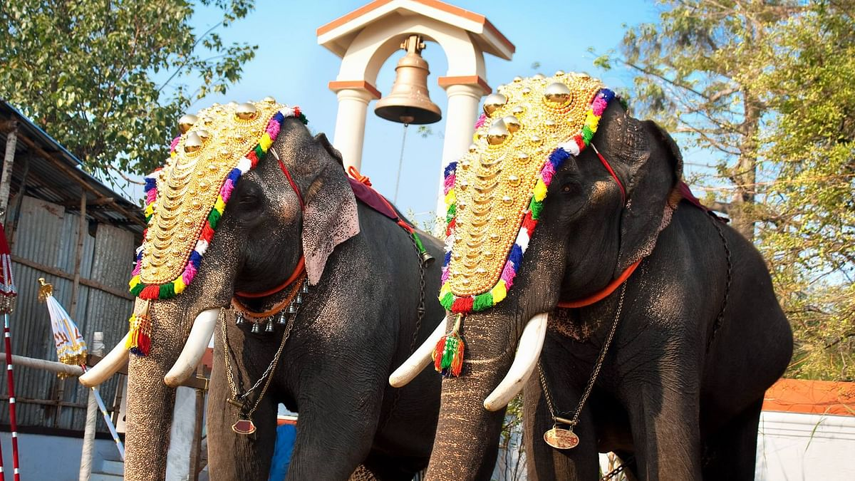 Kerala Covid-19: Temples to parade only one elephant for Thrissur Pooram; smaller rituals allowed