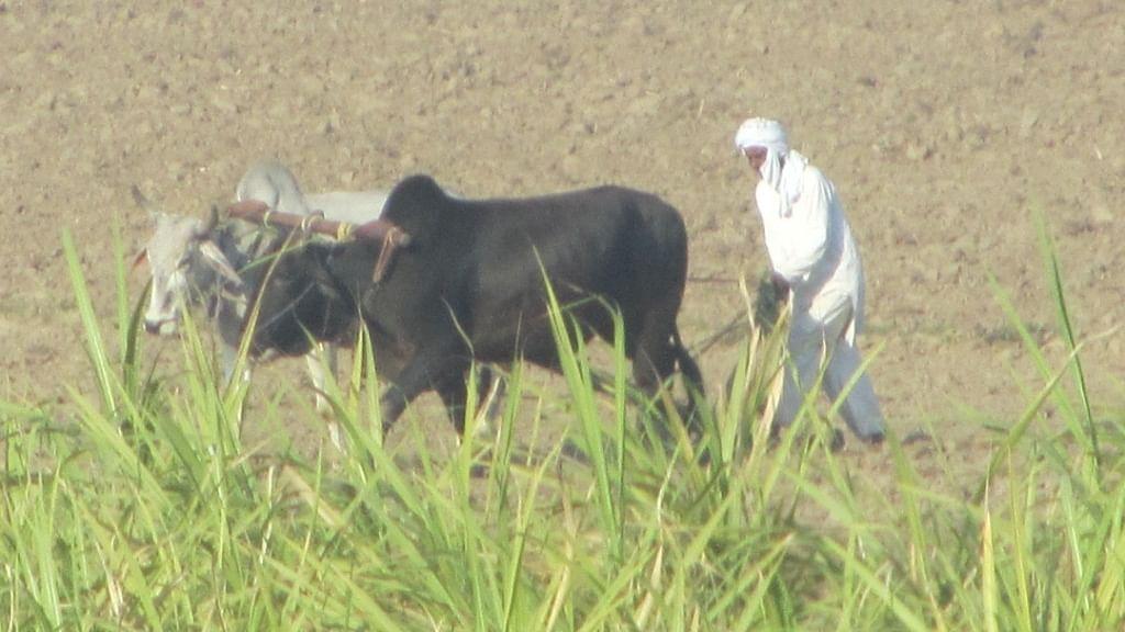 शोध रिपोर्ट का दावा, तापमान की स्थिति से प्रभावित होती हैं किसान आत्महत्या की घटनाएं