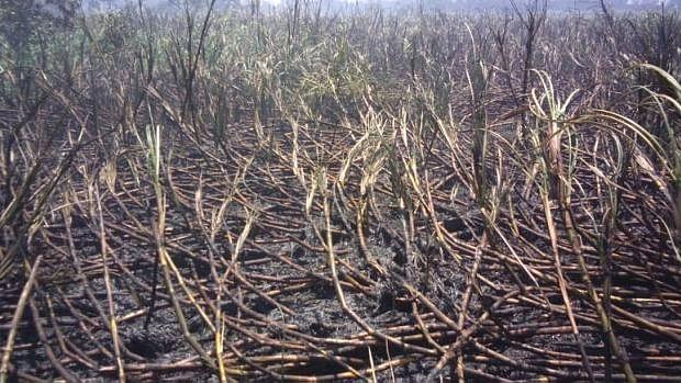 महाराष्ट्र: सीएम  और व केंद्रीय मंत्री के चुनाव क्षेत्र में  दीवाली के दिन किसान ने की आत्महत्या की कोशिश